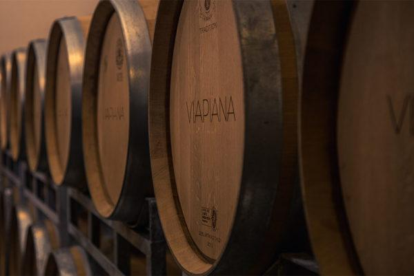 Visit and Wine Tasting
